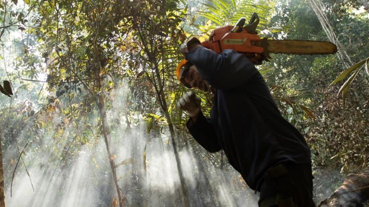 Apel o zakaz importu produktów uzyskanych dzięki wylesianiu Amazonii
