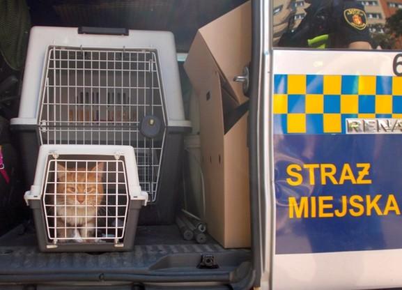 Warszawa. Kilkanaście osób ratowało kota, który był uwięziony w rurze odprowadzającej deszczówkę