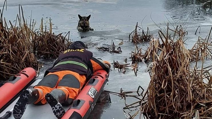 Pies wpadł do zamarzniętego jeziora. Trzymał się lodu przednimi łapami