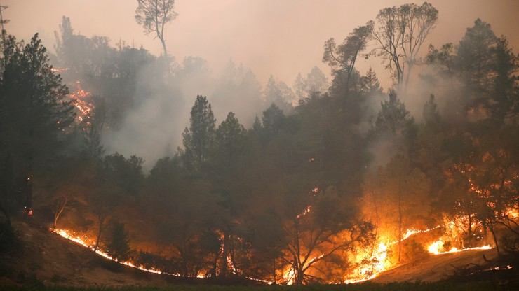 Pożary w Kalifornii. Od początku roku strawiły ponad 1,6 mln hektarów