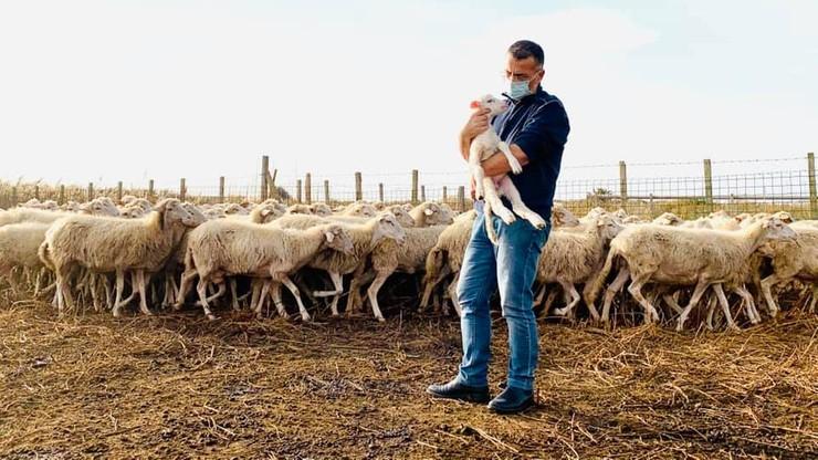 """Burmistrz """"urzędujący"""" na pastwisku. Pomaga pasterzowi zakażonemu koronawirusem"""