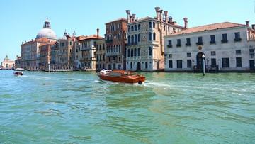 Koronawirus sprawił, że w Wenecji widać… ryby