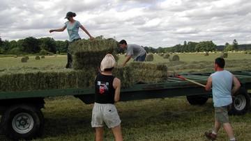 """""""Grozi nam paraliż"""". Rolnicy obawiają się odpływu pracowników z Ukrainy"""