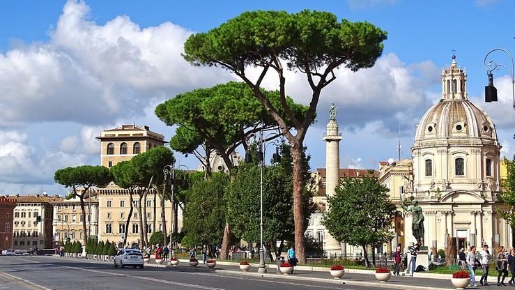 Szpaki utrapieniem w Rzymie. Na pomoc przylecą sokoły