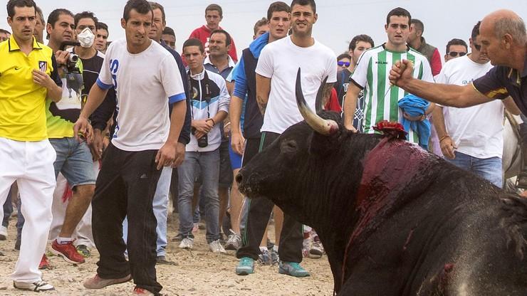 Hiszpański sąd zakazał jednego z najstarszych festynów z bykami