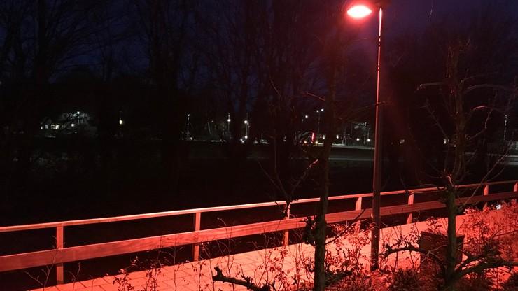 Mieszkańcy holenderskiego Barneveld pozbyli się latarni świecących na czerwono. Pomagały nietoperzom
