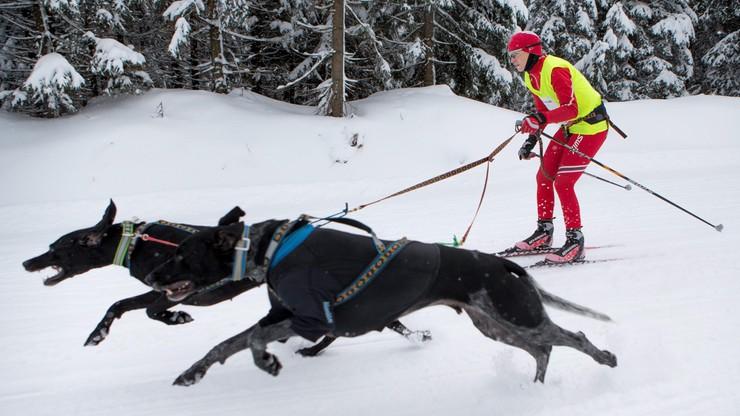 Ostatni bieg Bjoerndalena podczas zawodów... psich zaprzęgów!