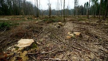 KE zaniepokojona decyzją o wycince w Puszczy Białowieskiej