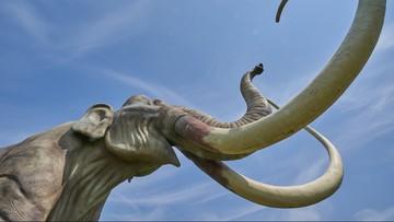 Znaleziono szczątki prehistorycznego ssaka podczas budowy II linii metra. Prawdopodobnie to mamut