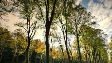 """500 euro kary za wejście na drzewo. """"Taka wspinaczka jest zagrożeniem dla samego drzewa"""""""