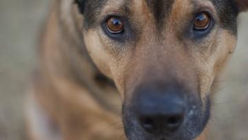 Więźniowie pomogą schroniskowym psom