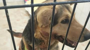 Sołtys ciągnęła psa za samochodem. Sprawą zajęła się prokuratura