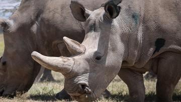 """Poszli do zoo i wydrapali swoje imiona na skórze nosorożca. """"To imbecyle"""""""