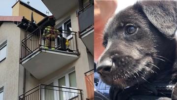 Zostawił psa na nagrzanym balkonie. Pomogła straż z wysięgnikiem