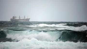 Hiszpania wybije krowy, które transportowano statkiem ponad dwa i pół miesiąca