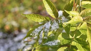 Czeka nas pierwszy powiew zimy. Synoptycy zapowiadają opady śniegu