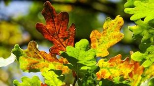 09.10.2021 05:59 Odkryj największy sekret jesieni. Dlaczego liście zmieniają barwę i opadają z drzew?