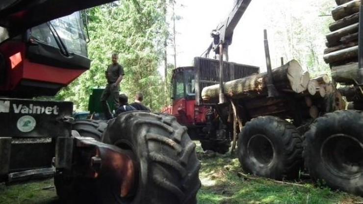 Leśnicy łamią sądowy zakaz wywozu z Białowieży ponadstuletnich drzew - alarmują ekolodzy