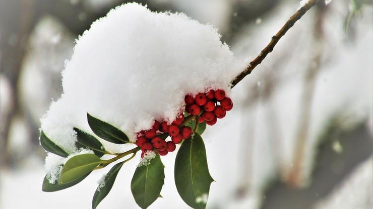 Deszcz, śnieg i nadal bardzo zimno. Pogoda na czwartek