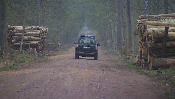 Ruszył remont Drogi Narewkowskiej w Puszczy Białowieskiej. Wbrew zaleceniom Komisji Europejskiej