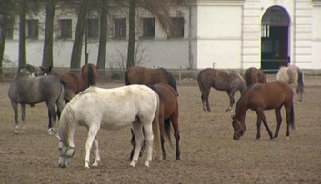 Shirley Watts chce pozwać polskie władze w związku ze śmiercią jej koni