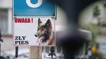 Psy zaatakowały dzieci jeżdżące na sankach. 9-latka zasłoniła ciałem 4-letniego brata