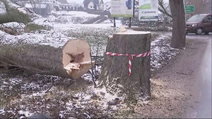 Ponacinane drzewa przy drodze wojewódzkiej. Jedno z nich prawie zmiażdżyło ciężarówkę