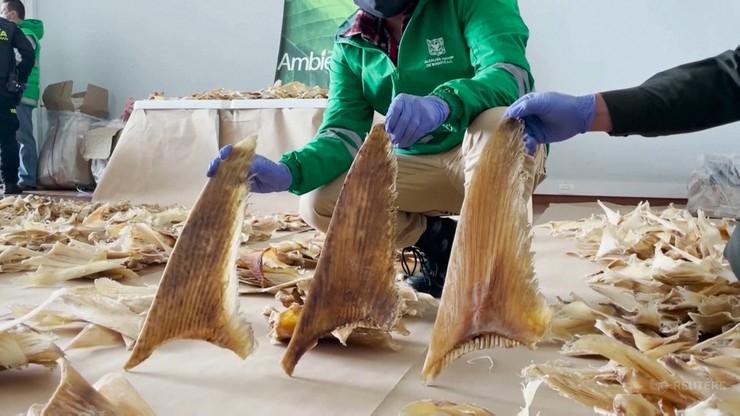 Niezwykły ładunek w Kolumbii. Przechwycono blisko 3,5 tys. płetw rekinów