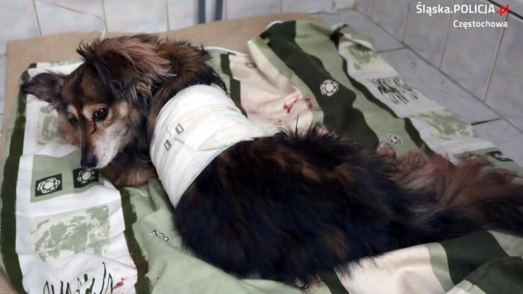 Znalazła zakrwawionego psa pod wanną. Partner twierdził, że to był wypadek