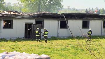 Pożar chlewni w Wielkopolsce. Spłonęło 4,5 tys. zwierząt