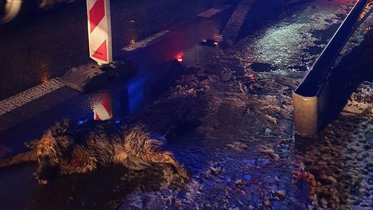 Potrącony pies czołgał się przez jezdnię, zatrzymał się tylko jeden kierowca. Jego post podbija sieć