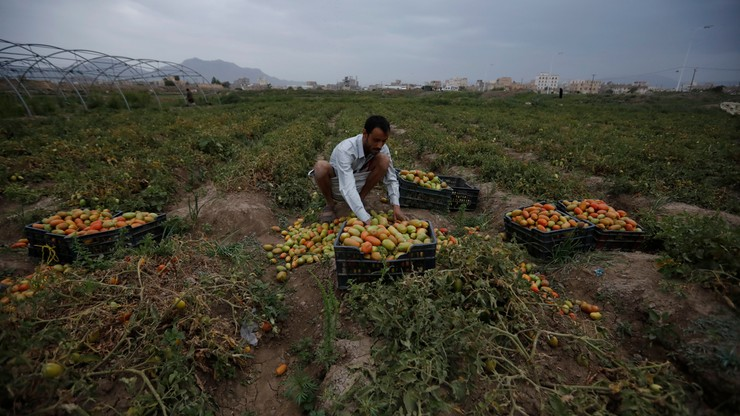 Kryzys Humanitarny w Jemenie. Raport: obie strony konfliktu niszczą przeciwnika głodem