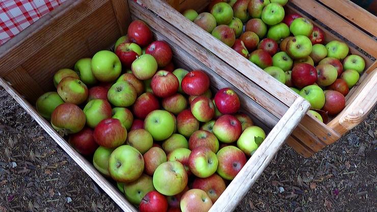 Ceny jabłek poszły mocno w górę. A może być jeszcze gorzej