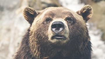 Zamknął się w klatce z niedźwiedziem. Tragiczny finał