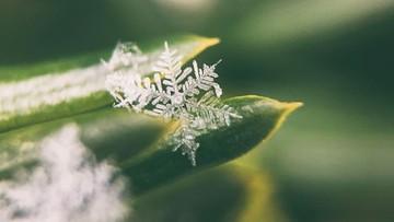 Pierwszy śnieg w Polsce. Jest nagranie