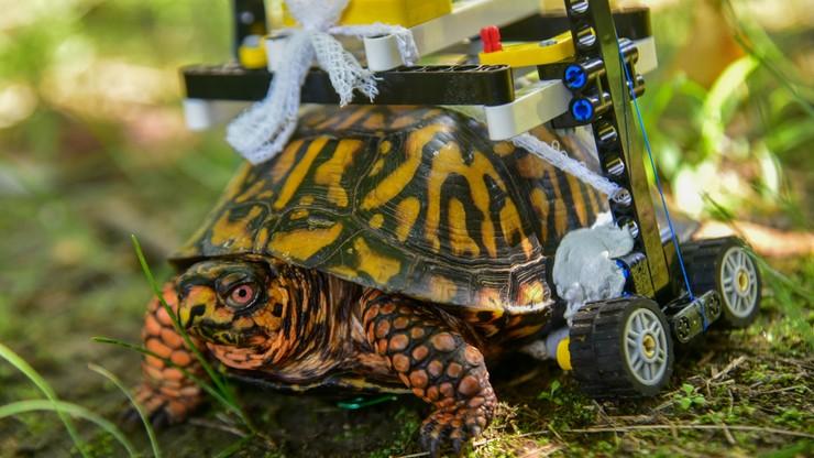 Żółw dostał wózek inwalidzki z klocków Lego